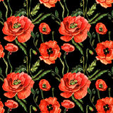 Wildflower poppy flower pattern in a watercolor style isolated. Royalty Free Stock Image