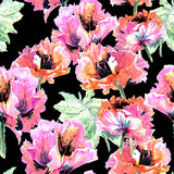 Wildflower poppy flower pattern in a watercolor style isolated. Full name of the plant: poppy, papaver,  opium. Aquarelle wild flower for background, texture Stock Image