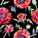 Wildflower poppy flower pattern in a watercolor style. Stock Photos