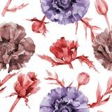 Wildflower poppy flower pattern in a watercolor style. Royalty Free Stock Photo