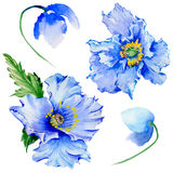 Wildflower poppy flower in a watercolor style isolated. Stock Photos