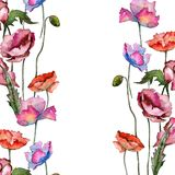 Wildflower poppy flower in a watercolor style isolated. Full name of the plant: poppy. Aquarelle wild flower for background, texture, wrapper pattern, frame or Stock Images