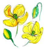 Yellow watercolor poppy. Wildflower poppy flower in a watercolor style isolated Stock Images