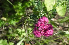 wildflower obrazy royalty free