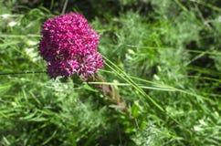 wildflower zdjęcia royalty free