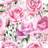 Wildflower różowej herbaty Rosa kwiatu wzór w akwarela stylu Zdjęcia Stock