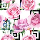 Wildflower różowej herbaty Rosa kwiatu wzór w akwarela stylu Zdjęcia Royalty Free