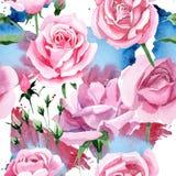 Wildflower różowej herbaty Rosa kwiatu wzór w akwarela stylu Obraz Royalty Free