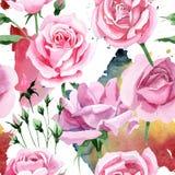 Wildflower różowej herbaty Rosa kwiatu wzór w akwarela stylu Obraz Stock