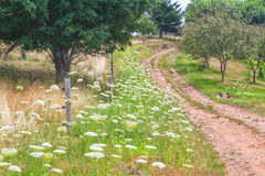 Wildflower Road Royalty Free Stock Photography