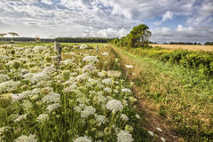 Wildflower Road Stock Photography
