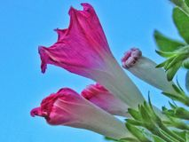 Wildflower rosado fotografía de archivo