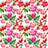 Wildflower rose arkansana flower pattern in a watercolor style isolated. Stock Images