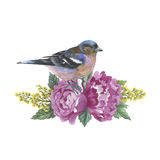 Wildflower rose flower and bird in a watercolor style isolated. Full name of the plant: rose, hulthemia, rosa. Aquarelle wild flower for background, texture Royalty Free Stock Photo