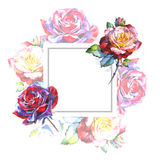 Wildflower rose flower frame in a watercolor style. Stock Image