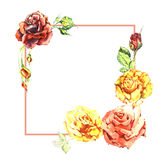 Wildflower rose flower frame in a watercolor style isolated. Royalty Free Stock Photo