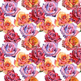 Wildflower rose flower pattern in a watercolor style isolated. Royalty Free Stock Photography