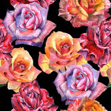 Wildflower rose flower pattern in a watercolor style isolated. Royalty Free Stock Photos