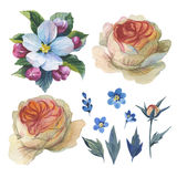 Wildflower rose flower set in a watercolor style isolated. Stock Images