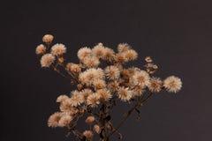 Wildflower secco immagini stock
