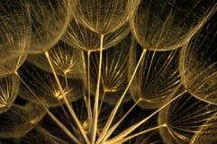 Wildflower seco Foto de archivo libre de regalías