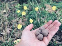 Wildflower Seed Bombs royalty free stock photo