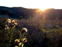Wildflower Seedheads  at sunset. Wildflower Seedheads at November sunset Stock Photography