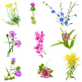 WildFlower Set Royalty Free Stock Images