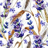 Wildflower spica pattern in a watercolor style. Wildflower spica flower pattern in a watercolor style. Full name of the plant: ear, spike, spica. Aquarelle wild Stock Photos