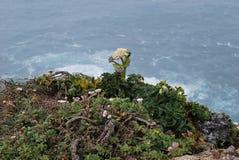 Wildflower sulla cima di punto Reyes Fotografia Stock