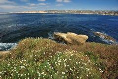 Wildflower sulla spiaggia Fotografia Stock