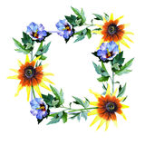 Wildflower sunflower flower frame in a watercolor style. Royalty Free Stock Images