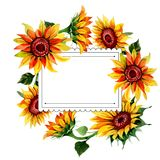 Wildflower sunflower flower frame in a watercolor style. Full name of the plant: sunflower. Aquarelle wild flower for background, texture, wrapper pattern Stock Image