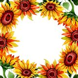 Wildflower sunflower flower frame in a watercolor style. Full name of the plant: sunflower. Aquarelle wild flower for background, texture, wrapper pattern Stock Photography