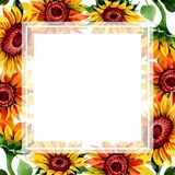 Wildflower sunflower flower frame in a watercolor style. Full name of the plant: sunflower. Aquarelle wild flower for background, texture, wrapper pattern Stock Images