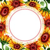 Wildflower sunflower flower frame in a watercolor style. Full name of the plant: sunflower. Aquarelle wild flower for background, texture, wrapper pattern Royalty Free Stock Photos