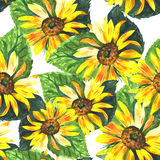 Wildflower sunflower flower pattern in a watercolor style. Full name of the plant: sunflower. Aquarelle wild flower for background, texture, wrapper pattern Stock Photo