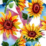 Wildflower sunflower flower pattern in a watercolor style. royalty free illustration