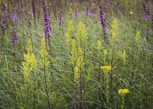 Wildflower Tapestry. Ie grasses are interwoven into a tapestry of nature textures and colors at Shoe Factory Road Prairie Nature Preserve.  Cook County, Illinois Royalty Free Stock Image