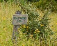 Wildflower teren fotografia stock