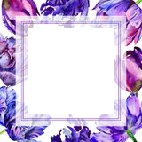 Wildflower tulip flower frame in a watercolor style. Royalty Free Stock Image