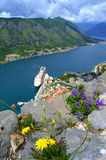 Wildflower on wall above Kotor bay Royalty Free Stock Images