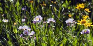 Wildflower-Wiese im Frühjahr Lizenzfreie Stockbilder