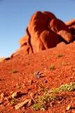 Wildflower zabytku dolina Zdjęcie Stock