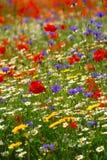 Wildflowerachtergrond royalty-vrije stock foto
