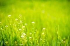 Wildflowerd und Gras Lizenzfreies Stockbild
