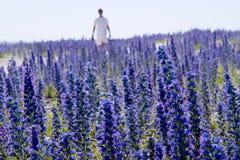 Wildflowerechium vulgare.JH stock afbeelding
