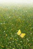 Wildflowerfeld Lizenzfreie Stockbilder