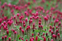 Wildflowerfeld Lizenzfreies Stockbild