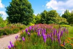 Wildflowerflecken Lizenzfreie Stockbilder